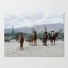 Bahía De Los Ángeles W… Canvas Print