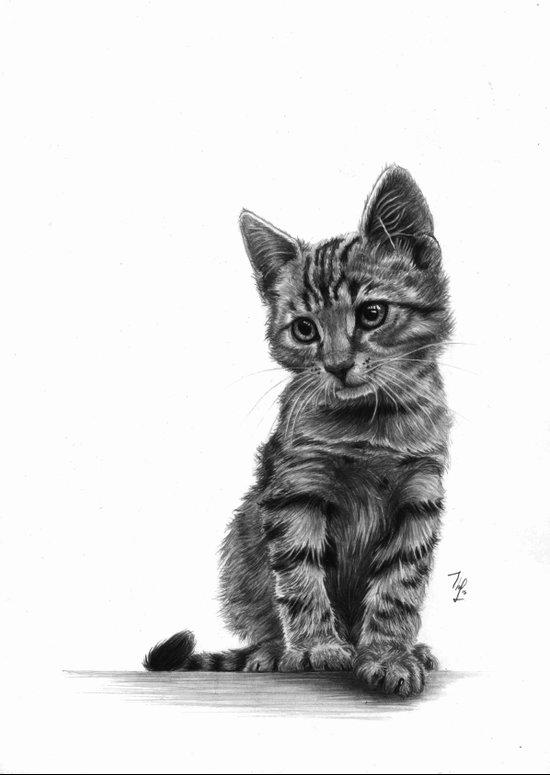 Kitty - PENCIL DRAWING  Art Print