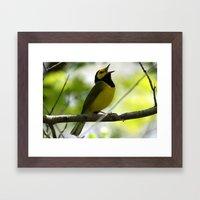 Hooded Warbler Framed Art Print