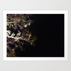 Jacaranda tree, blooming in the night Art Print