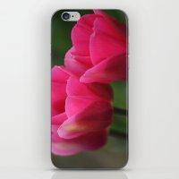 Tulip Festival 1 iPhone & iPod Skin