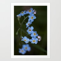 Water Forget Me Not Art Print