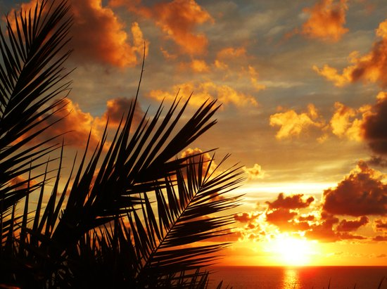 Golden Sunset on the Ocean with Palmtree Art Print