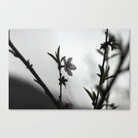 Blossom II Canvas Print