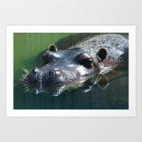 Hippopotamus Art Print