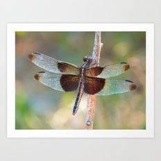 Dragonfly X Art Print
