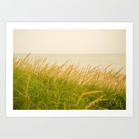 Dune Grass At Dusk Art Print