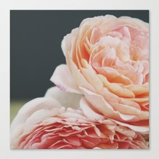 Summer Roses Canvas Print