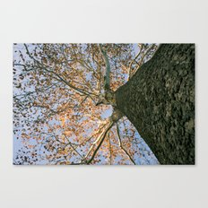 Fall is in the Air (and on the Leaves) Canvas Print