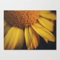 Sunflow Daze Canvas Print