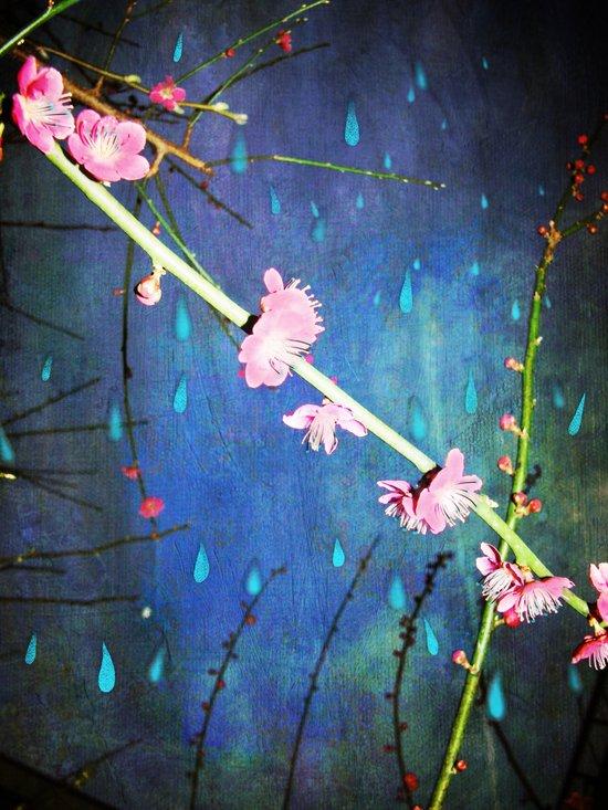 Lluvia en Abril Canvas Print