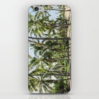 Loads Of Palm Trees iPhone & iPod Skin