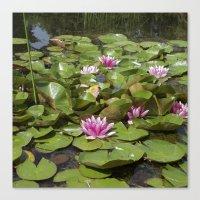 summer garden pond III Canvas Print