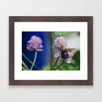 Carpenter Bee 1 Framed Art Print