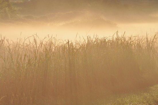 Field Grass in the Mist  2 Art Print