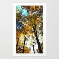 Glowing Treetop Art Print