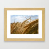 Fields of Gold Framed Art Print