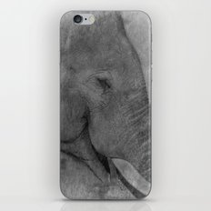 Asian Elephant iPhone & iPod Skin
