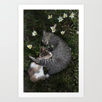 Sleep [A CAT AND A KITTE… Art Print