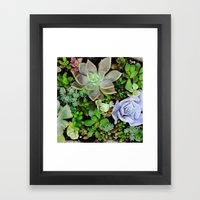 Collection of Succulents Framed Art Print