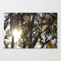 Leaves and Light Canvas Print
