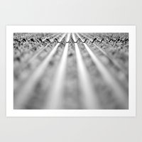 Every path has its obstacles  Art Print