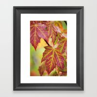 Maple Leaves Framed Art Print