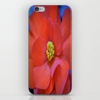 F L O U W E R iPhone & iPod Skin