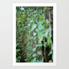 post tropical Art Print