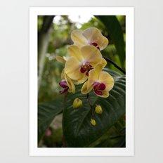 Sunny Yellow Orchid Art Print