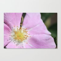 close up on flower Canvas Print
