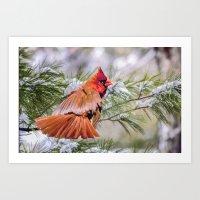Christmas Cardinal. Art Print