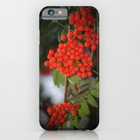Rote Beeren iPhone 6 Slim Case