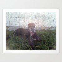 Sunny days - Greyhound photo Art Print