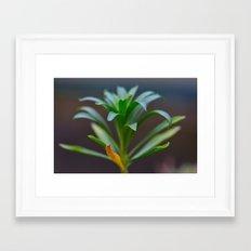 Weathering Well Framed Art Print