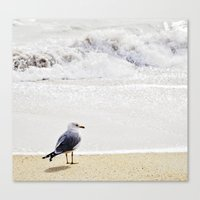 Solitary Gull Canvas Print