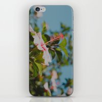 Soft Pink Hibiscus iPhone & iPod Skin
