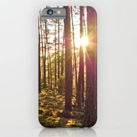 Evening In The Forest iPhone 6 Slim Case