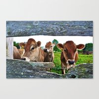 The Other Side Of The Fence Canvas Print