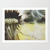 Dandelion: Seeds Horizontal Art Print