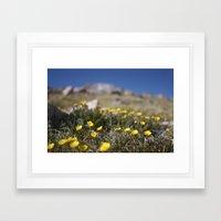 Alpine Avens Framed Art Print