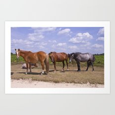 New Forest Ponies Art Print