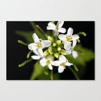 Tiny White Canvas Print