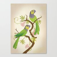 Black-capped conure Canvas Print