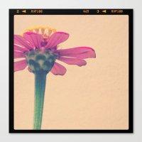 FLOWER 017 Canvas Print