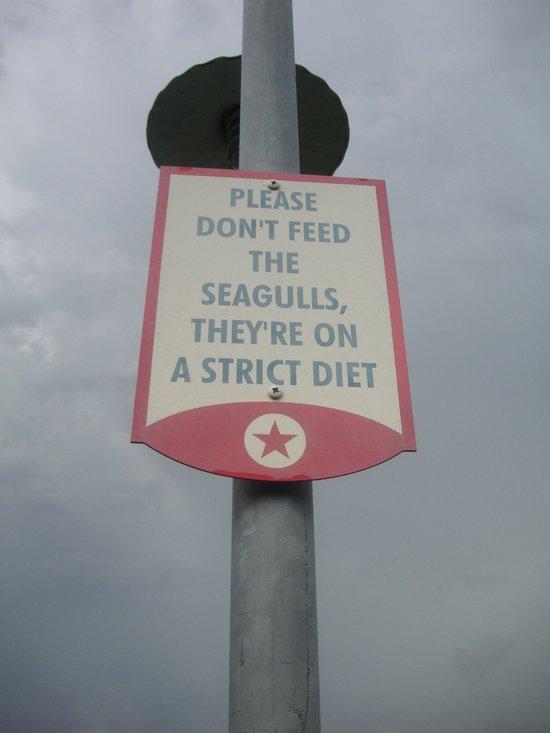 Seagulls on a Diet Art Print