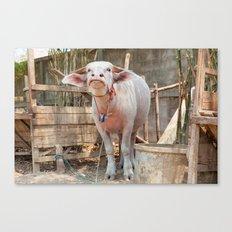 The Albino Buffalo Canvas Print