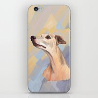 Whippet face iPhone & iPod Skin