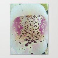 Foxglove 2 Canvas Print