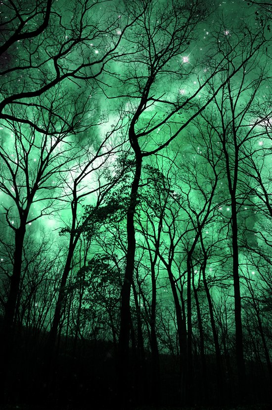 The Trees Reach Out at Night Art Print
